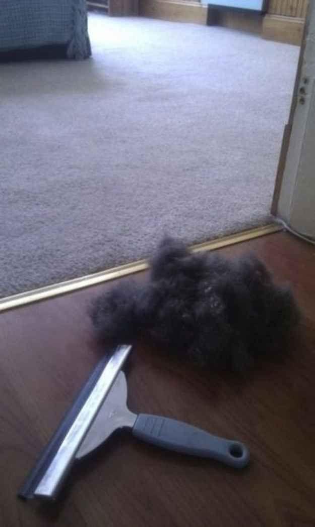 Hund Haare