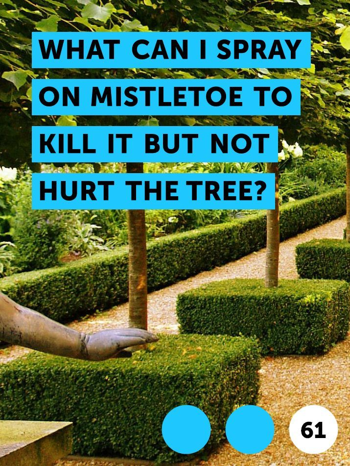 What Can I Spray On Mistletoe To Kill It But Not Hurt The Tree Organic Vegetable Garden Fruit Trees Organic Soil
