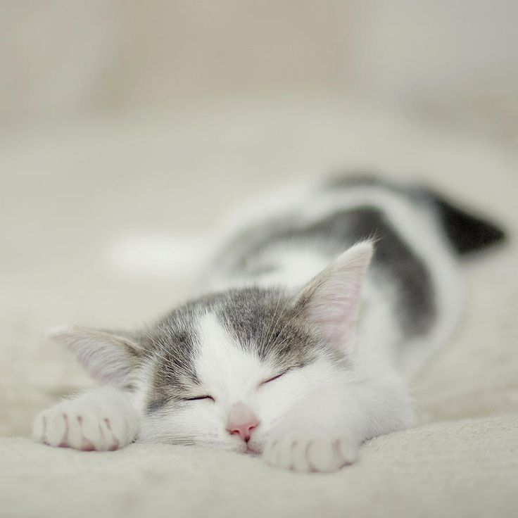 """""""A kitten provides a child with a sleepover friend for life."""" --Author Unknown"""