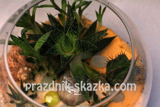 http://prazdnik-skazka.com/master-klassy/florarium