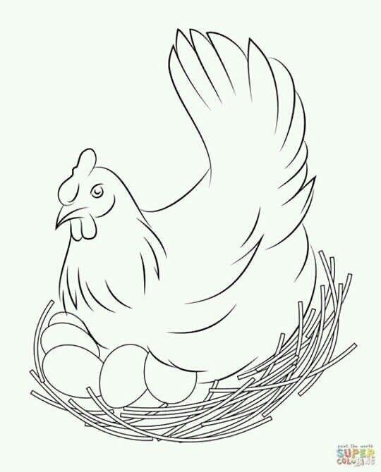 Yo Quiero Pintar Dibujos Gallinas Dibujos Dibujos De Pájaro