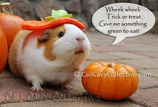 how to make your guinea pig a costume