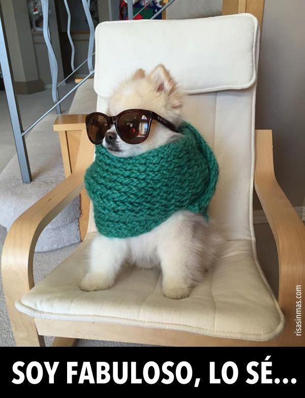 Soy fabuloso, lo sé…. #humor #risa #graciosas #chistosas #divertidas
