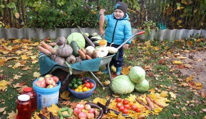 Рассказ про сбор урожая для детей