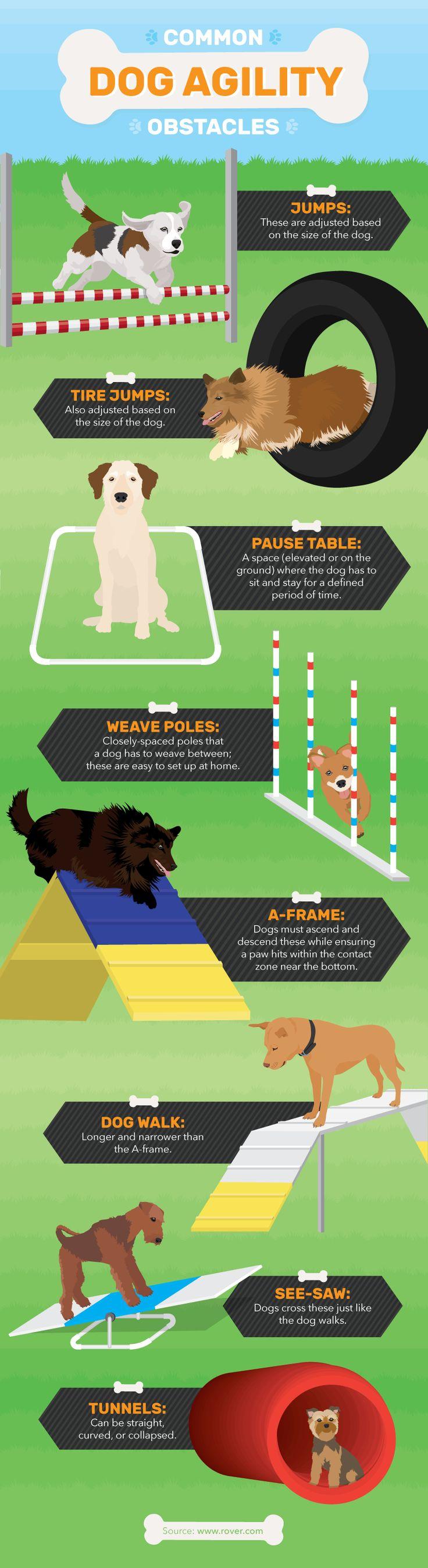 Dog Agility Obstacle Course - Dog Agility Training