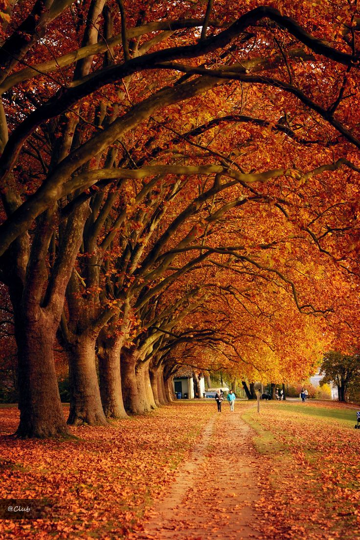 Autumn Germany