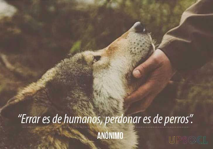 17 frases poderosas que te harán valorar aún más la existencia de los animales
