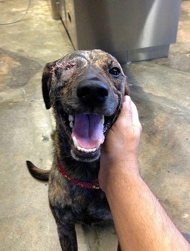 Hope Dog Rescue Bc