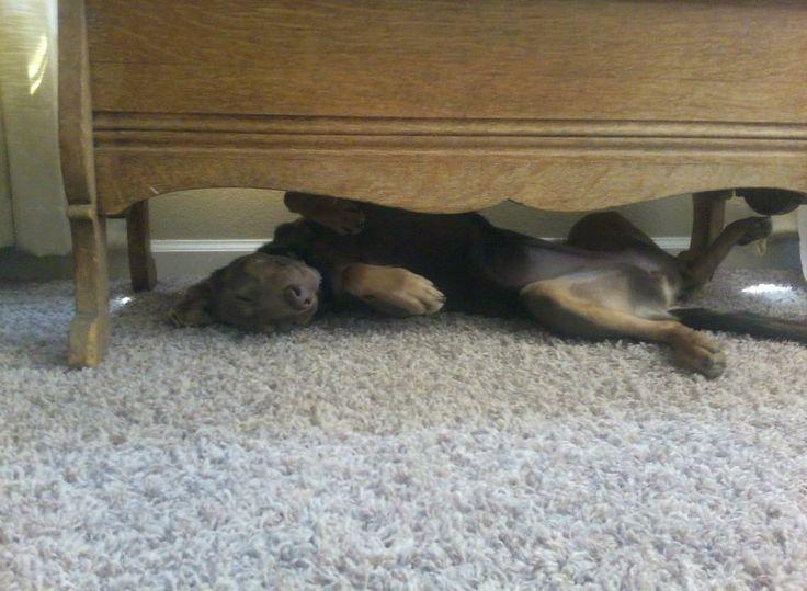 Too big to sleep here now :)