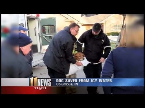 Columbus, Ind. firefighters rescue golden retriever from Tipton Lakes