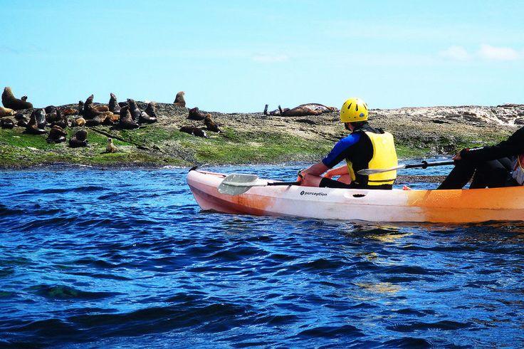 Head to Apollo Bay for Unforgettable Kayaking | Qantas Travel Insider