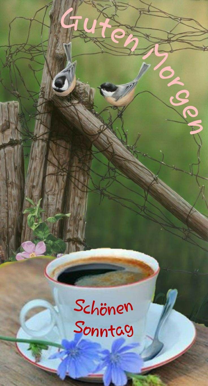 Schöne guten morgen bilder sonntag