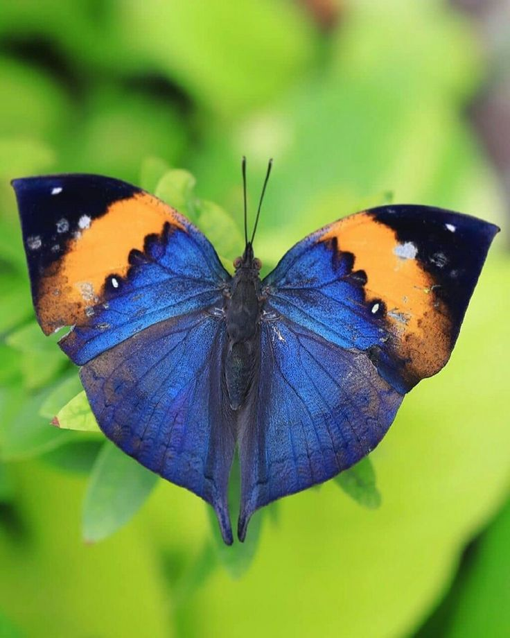 Картинки животных бабочек