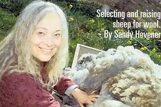 Selecting and Raising Sheep for Wool - Homesteading and Livestock - MOTHER EARTH NEWS