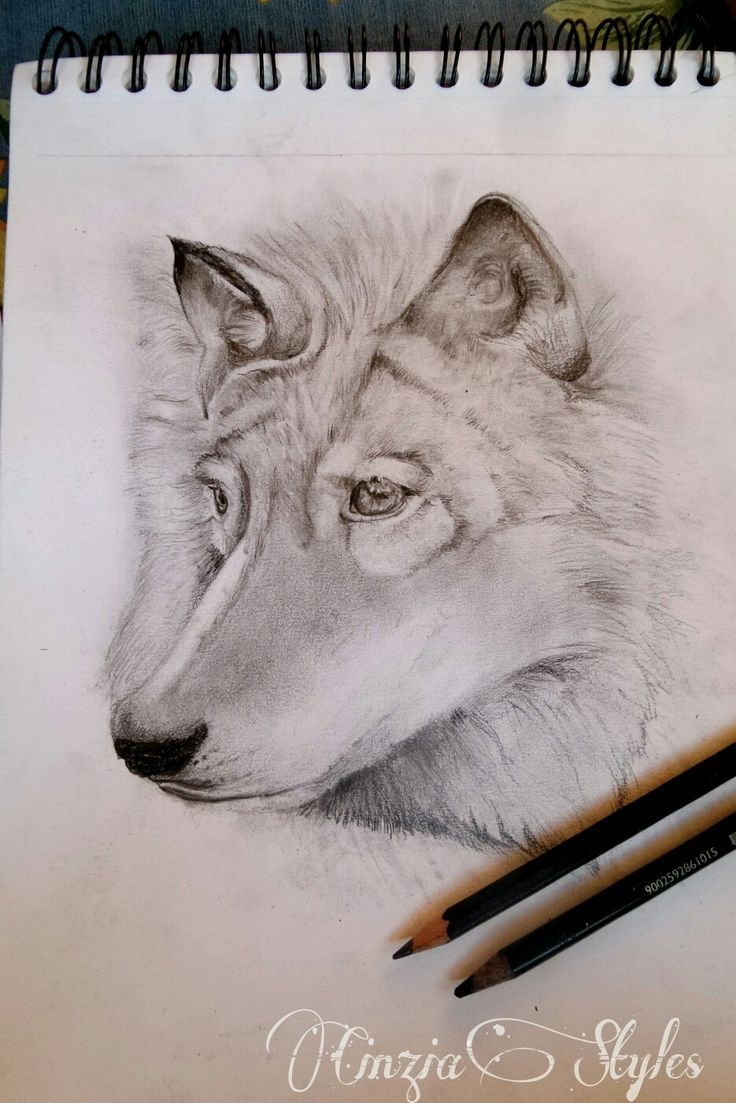 Lupo a matita