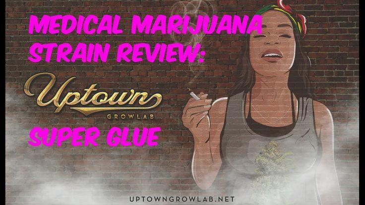 Super Glue Medical Marijuana Strain Review