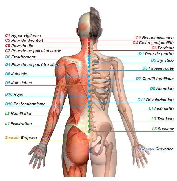La symbolique du corps permet de comprendre la somatisation des maux. Cartographie (mapping) des points le long de la colonne vertébrale.