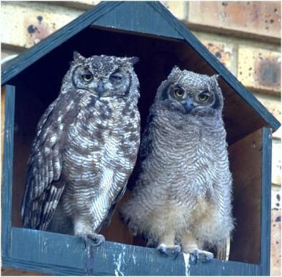 attract owls to your property | for sale. An Owl House (owl box) will attract an owl family to your ...