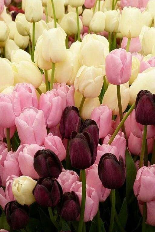 фотографии самых красивых тюльпанов стоимость установки натяжных
