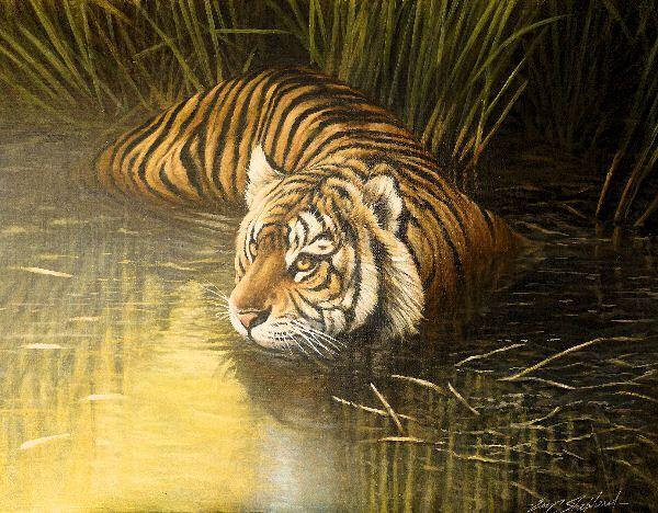 Tigers,