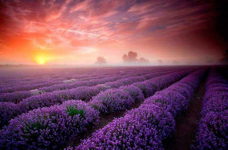 Lugares mágicos que convierten al planeta en un mundo imaginario  Campos de Lavanda, Francia. Foto: Antony Spencer