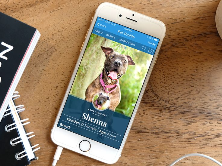 AllPaws App Pet Profile Redesign by Jason Kirtley