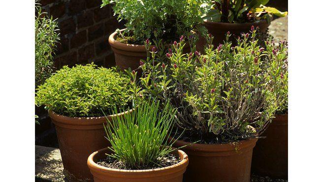Les erreurs à éviter dans la culture des plantes aromatiques                                                                                                                                                     Plus