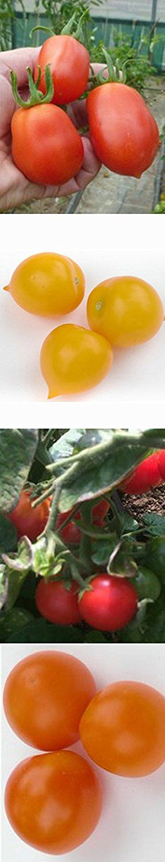 Für Weihnachten. Tomaten-Anzucht-Set: 'Alte, aromatische Tomatensorten', 5 besondere Tomatensamen-Sorten mit Minigewächshaus & Aussaatzubehör: Amazon.de: Garten