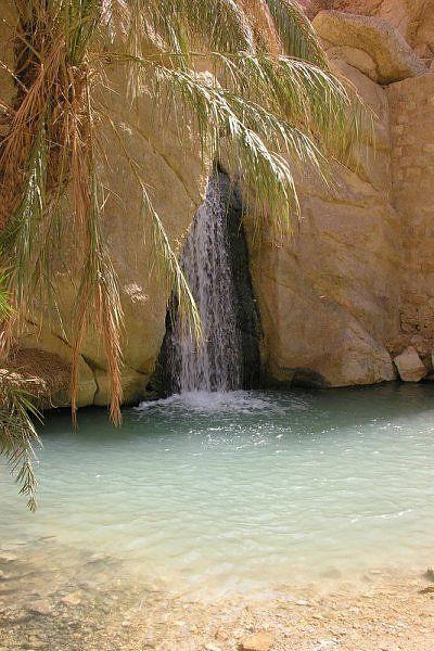 Oasis in Tunisia