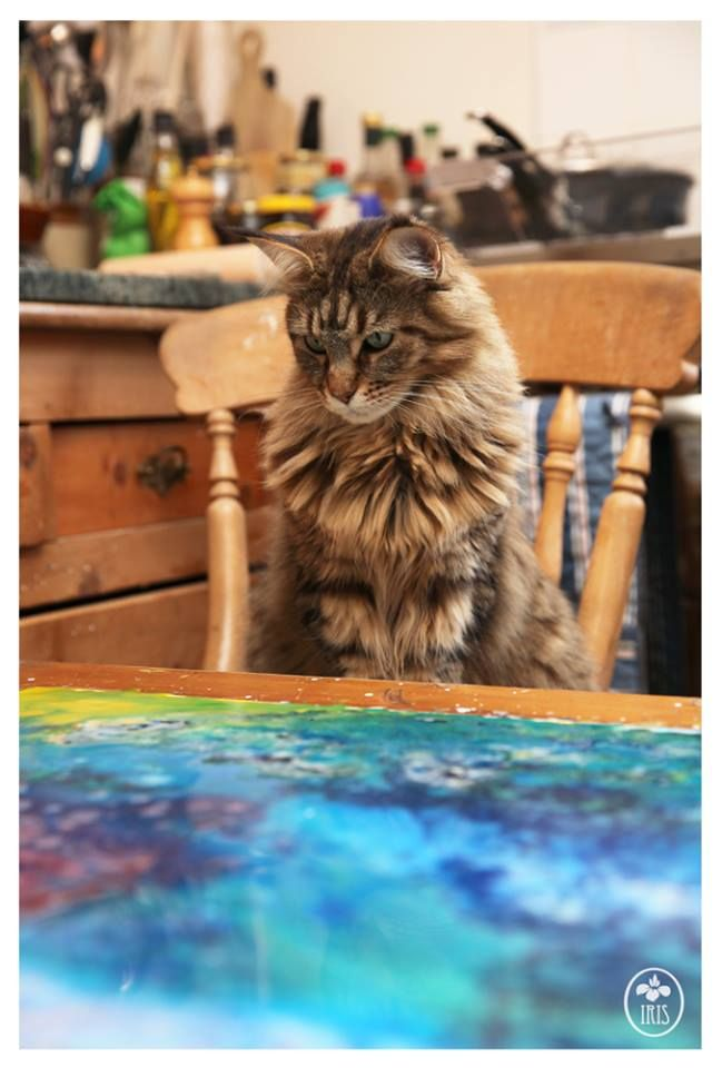 Thula watching the colours move on the yupo paper this morning, she seems to be just as interested as Iris is. (via Iris Grace Painting)