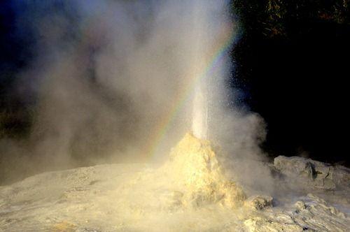 Lady Knox geyser at Wai-o-Tapu