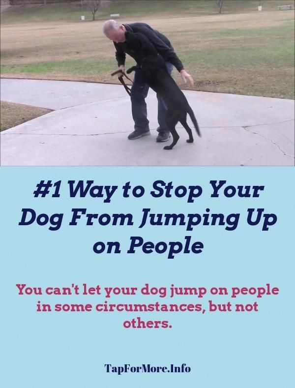 Stop Dog Jumping And Dog Training Obedience Check The Pin For Many Dog Training Tips For Jumping 8567978623 Dogstrain Dog Training Tips Jumping Dog Training Tips Dog Clicker Training Dog Training