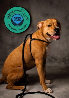 Vorschau: Hundeleine Leinenzieher für große Hunde - Harness Lead