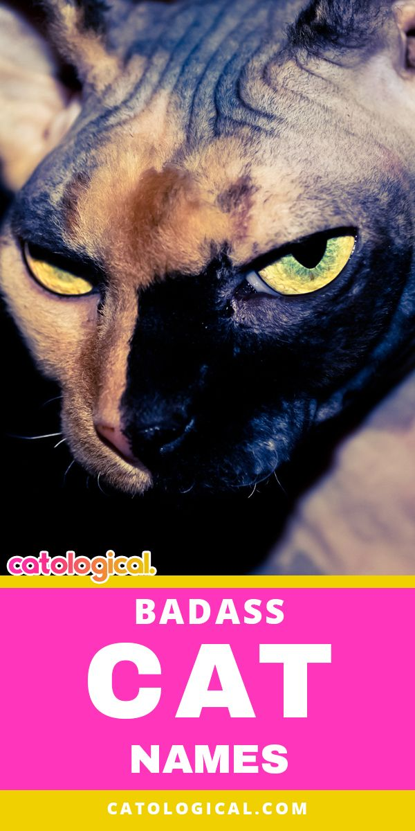 500 Of The Most Badass Cat Names Badass Cat Names Kitten Names