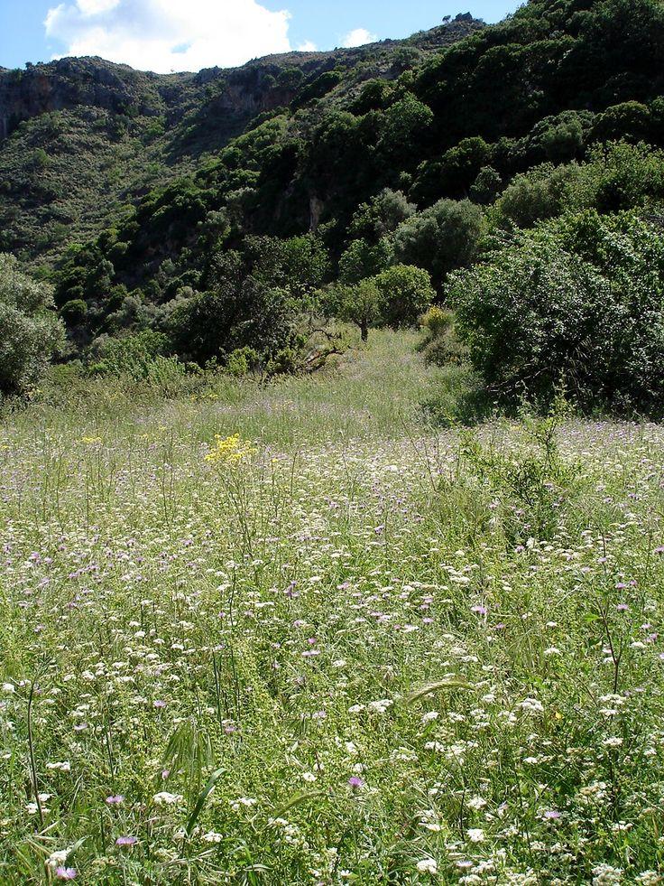 Sirikari meadow