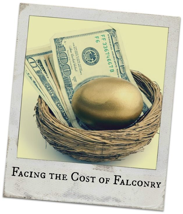 How much does it cost to become a falconer? Here is a list of the costs associated with falconry.