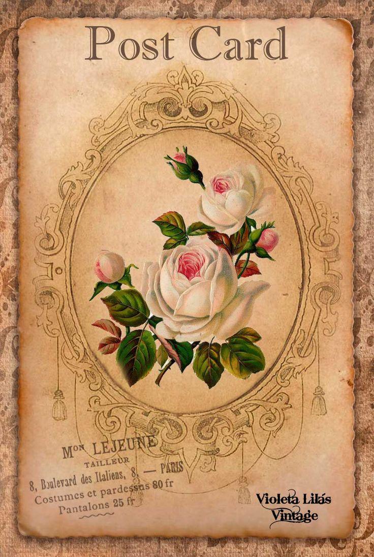 Violeta lilás Vintage: Cartões Postais Antigos - Série Flores