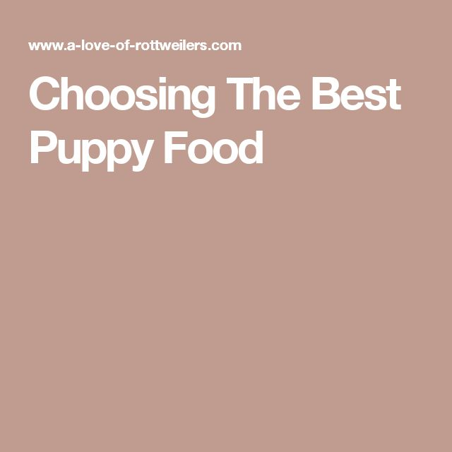 Choosing The Best Puppy Food