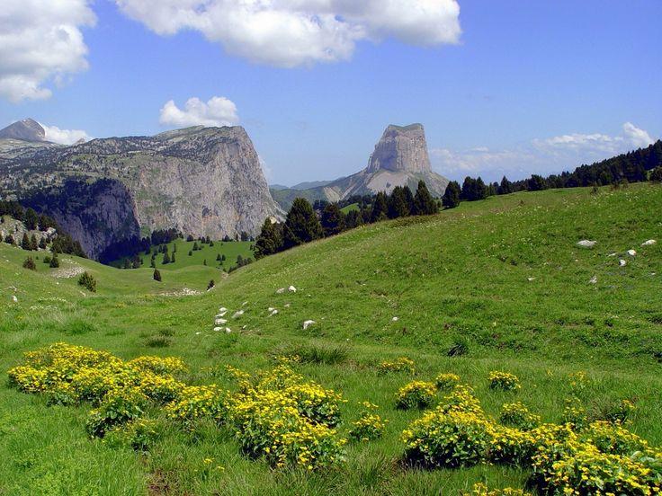 Flowers Mont Aiguille
