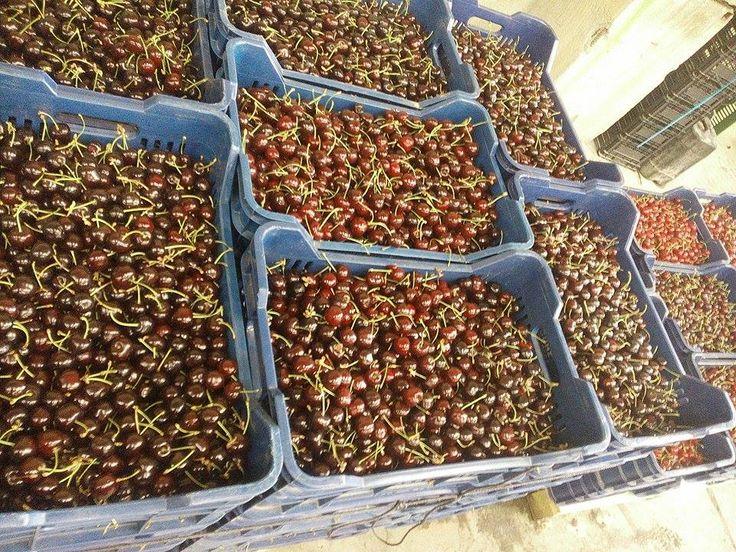 Μαύρα και γλυκά ή ξανθά και ξινά; Η Realfruit έχει όλα τα κεράσια για όλα τα γούστα! Επικοινωνήστε με τον υπεύθυνο πωλήσεων Πολατίδη Γεώργιο για περισσότερες λεπτομέρειες: 6947040664