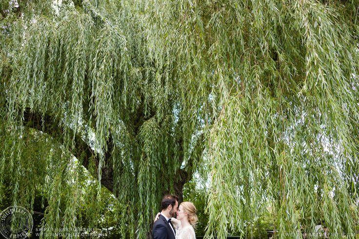 Bride and groom under a weeping willow. Ward Island Wedding Photography, Toronto Island wedding, #wardsisland #sweetheartempirephotography