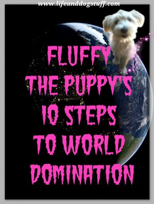 Fluffy's 10 Steps To World Domination at Life and Dog stuff blog!