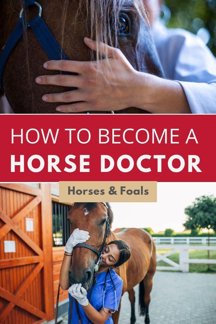 Equine Massage Therapy Schools Equine Massage Therapy Equine Massage Massage Therapy School