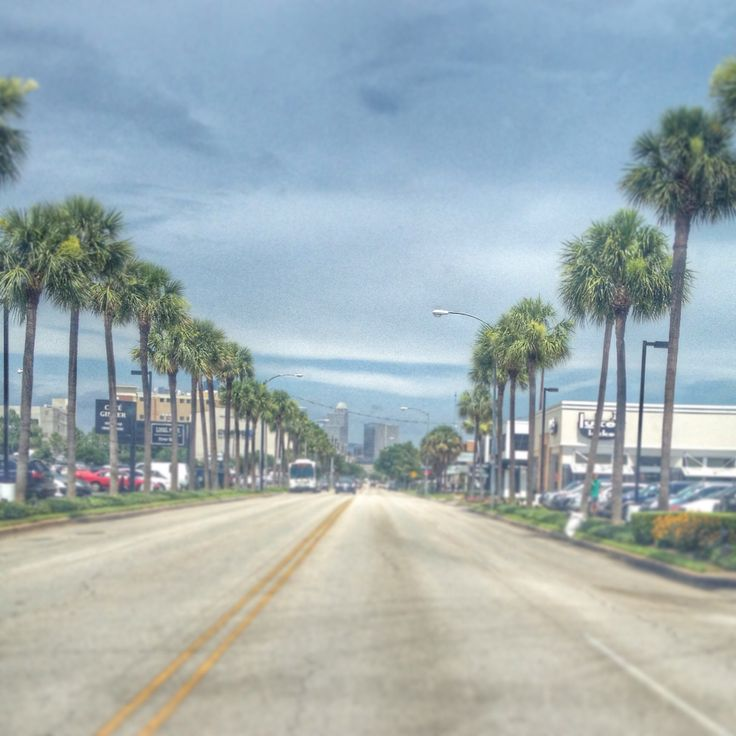 Houston Oaks: More Palm Trees In Houston? (Live Oak, Livingston