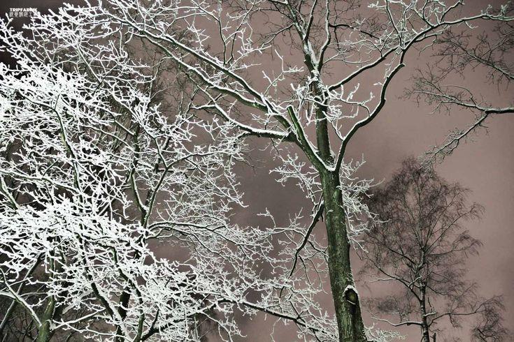 Winter at Teutoburger Wald in Bielefeld Ostwestfalen NRW Deutschland  Photography about the city of Bielefeld, at the Teutoburger Forest in Ostwestfalen, Germany.   Fotografie   Stadt Bielefeld   Teutoburger Wald   Ostwestfalen   Deutschland http://tripfabrik.de/bielefeld http://tripfabrik.de/flug-bielefeld #bielefeld #deutschland #germany #ostwestfalen #teuto #tripfabrik #teutoburger #wald #fotos #winter #schnee #snow  http://tripfabrik.de