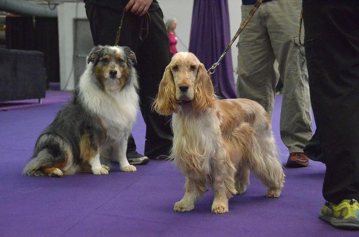 Dog Training Eccleston