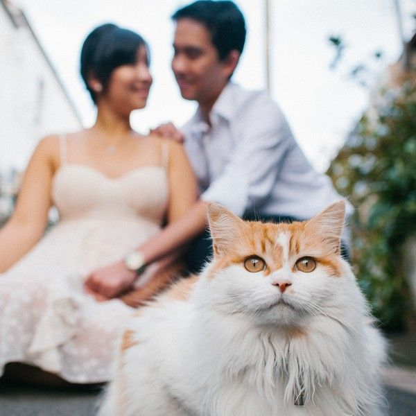Best Wedding Shoot Ideas On Pinterest Wedding Poses Wedding - Guy gets professional photoshoot with his cat engagement photos