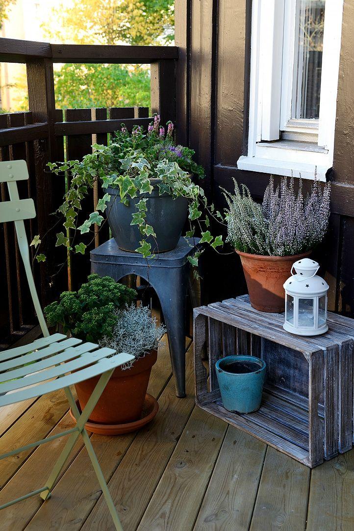 pflanzen mein balkon pinterest pflanzen balkon und. Black Bedroom Furniture Sets. Home Design Ideas