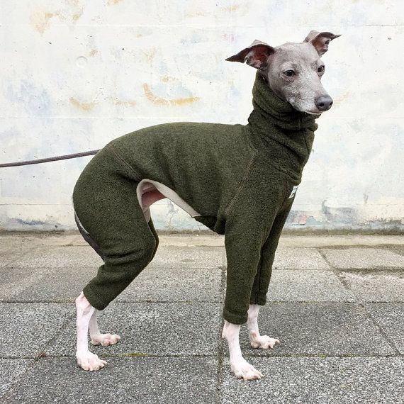 Best 25 Italian Greyhound Clothes Ideas On Pinterest