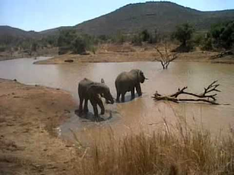 2 bull elephants cooling off in one of the numerous watering holes found in the Pilanesberg.